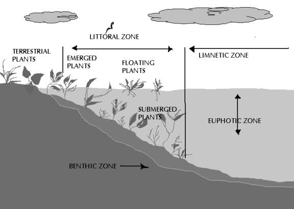 Fig 11: Lake Zones. COUPLING OF HABITATS: Benthic and pelagic habitats are